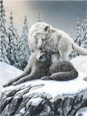 Photo of Snow Kisses Canvas Wolf Picture (Lisa Parker) 25 x 20 cm