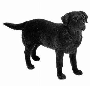 Photo of Black Labrador Leonardo Collection