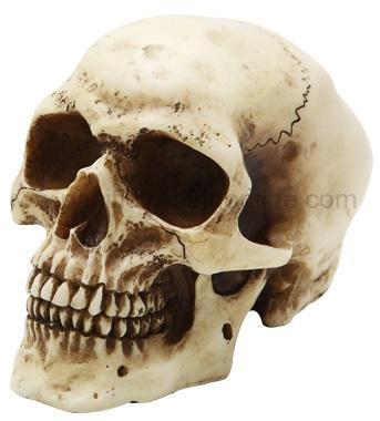 Photo of Small Skull Ornament