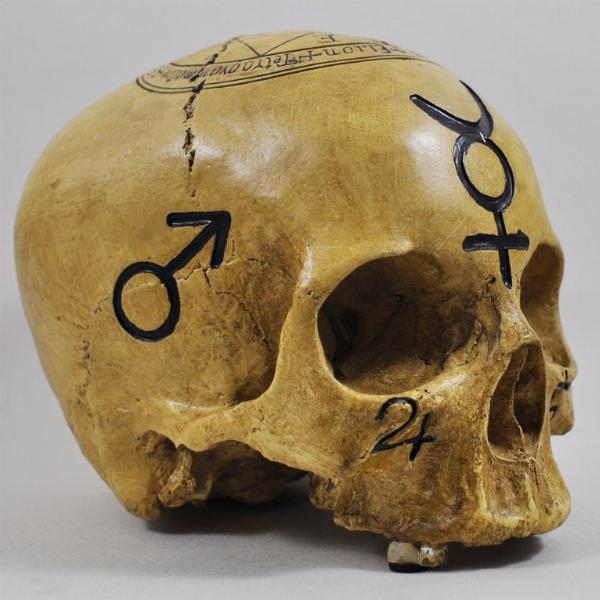 Photo of Witchcraft Skull