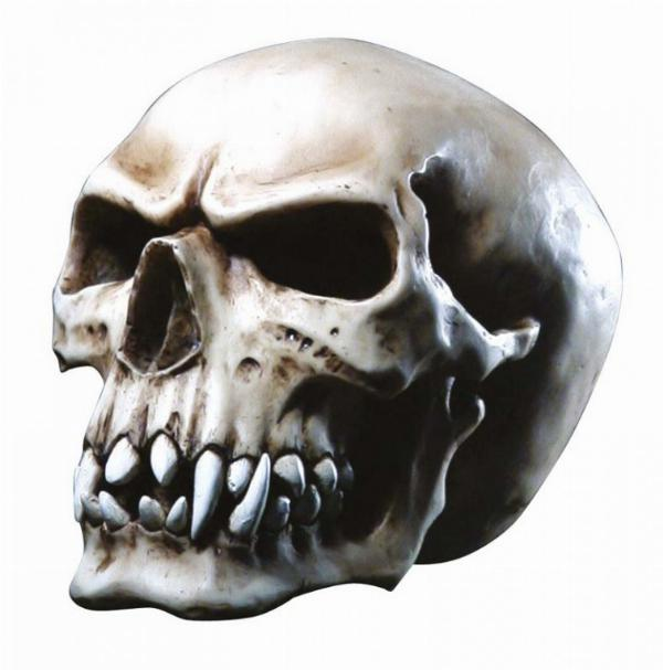 Photo of Orc Skull 16 cm