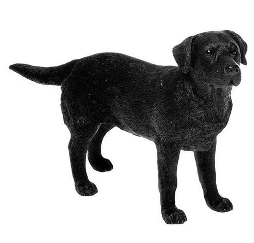 Photo of Black Labrador Leonardo Collection