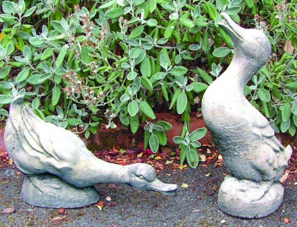 Photo of Pair of Courting Ducks Stone