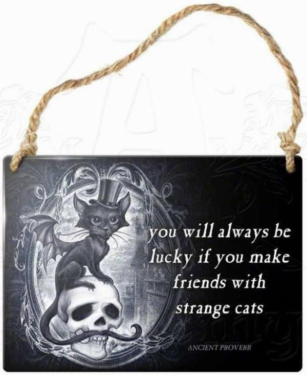 Photo of Strange Cats Small Steel Plaque