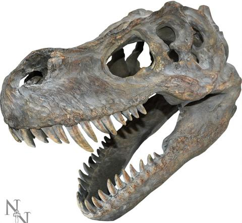Photo of Tyrannosaurus Rex Skull Large Wall Plaque 40 cm